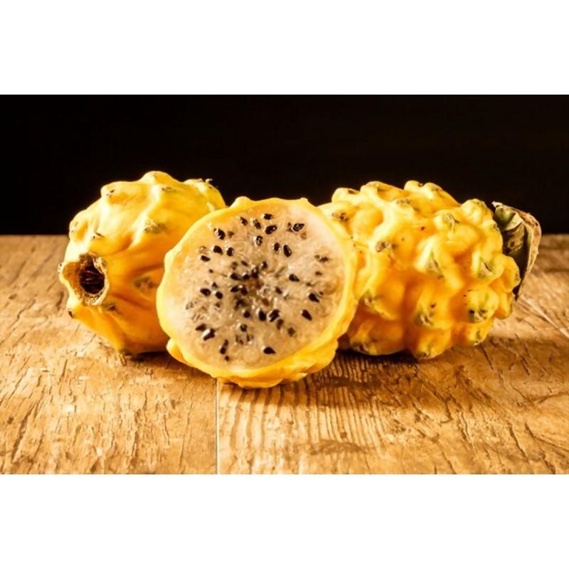 کاکتوس دراگون فروت (میوه اژدها)