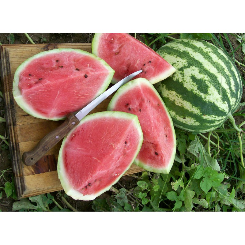 بذر هندوانه